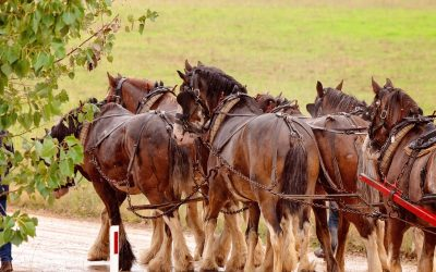World-Famous Budweiser Clydesdales Visit Ocala, Florida – Clydesdales Will Appear in Ocala for Parade of Nations